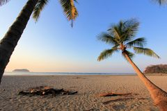 Samara beach, plam trees pacific ocean Royalty Free Stock Image