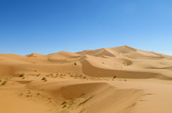 Beautiful sand desert landscape royalty free stock images