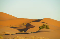 Beautiful sand desert Sahara dunes and green bush stock photos