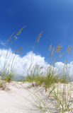 Beautiful sand dune and grasses Stock Photography