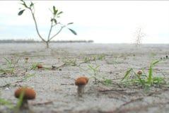 Beautiful Sand. Holiday At Beautiful Clean Beach Stock Photo