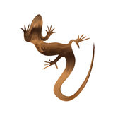 Beautiful sand lizard, lizard silhouette. Vector Royalty Free Stock Images
