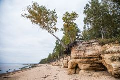 A beautiful sandstone shore landscape. Trees growing on a sandstone cliffs ar the Baltic sea. Scenery with a caves. Stock Image