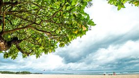 Beautiful sandy beach, amazing sky and big green tree. Timelapse. Tropical Bali island, Indonesia. stock video footage