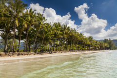Beautiful sandy beach with coconut palms against the blue sky. Royalty Free Stock Photography