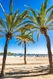 Platja d`Alcudia on Majorca Spain Mediterranean Sea. Beautiful sandy beach with tropical palm trees at Platja d`Alcudia on Majorca island, Spain Mediterranean Stock Photo