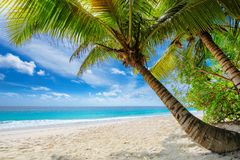 Beautiful sandy Caribbean beach with palm and a sailing boat in the turquoise sea. Beautiful sandy beach with palm and a sailing boat in the turquoise sea on royalty free stock images