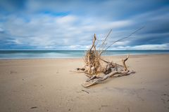 Beautiful sandy sea shore with driftwood Royalty Free Stock Photography