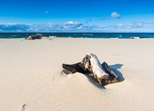 Beautiful sandy sea shore with driftwood Royalty Free Stock Photos