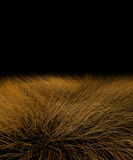 Beautiful savanna grass Stock Photography