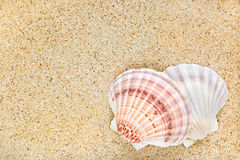 Beautiful Scallop seashells on sand background with copyspace Stock Images