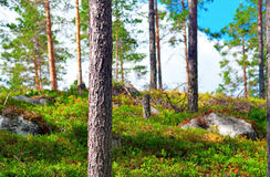 Beautiful Scandinavian fores Stock Photography