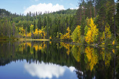 Beautiful scandinavian lake in autumn. Beautiful scandinavian lake with yellow birch trees in autumn Royalty Free Stock Image