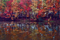 Beautiful scarlet, yellow, orange trees at the river coast reflect in the water. Stock Image