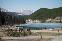 A beautiful scene at a campground in British columbia Royalty Free Stock Photo