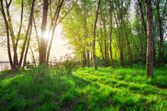 Beautiful scene in the forest Stock Photography
