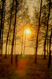 Beautiful scene in forest with sun Royalty Free Stock Photo