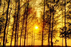 Beautiful scene in forest with sun Stock Photo