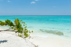 Beautiful scene in Indian Ocean, Maldives Islands Stock Photography