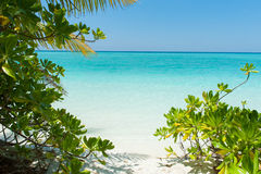 Beautiful scene in Indian Ocean with plants on beach Royalty Free Stock Image
