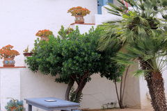 Beautiful scene of large potted flowers and trees, near entrance of home Stock Images