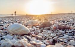 Beautiful scene with shells at beach. With orange sun Stock Image