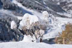 Scene of sunrise on the snowy mountain a day of beautiful sun. stock photography