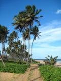 Beautiful scene of a tropical beach Royalty Free Stock Photo