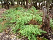 Beautiful scene and vegetation Royalty Free Stock Image
