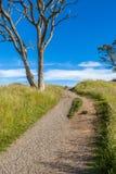 Beautiful scene of walking track beside alone tree on Auckla Stock Image