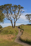 Beautiful scene of walking track beside the big tree on Auck Royalty Free Stock Photos