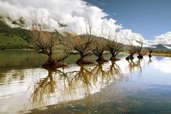 Beautiful Scenery. Dried trees on a lake in New Zealand shot at last autumn season Royalty Free Stock Photos