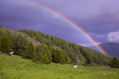 Rainbow and whire horses in valley stock images