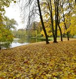 Ground was covered with yellow leaves by the river,like a big carpet stock images
