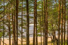 Beautiful scenery of the Baltic sea coast with pine trees in foreground and clear blue sky stock image