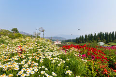 Beautiful Scenery. Of Flower Garden in Royal Park Ratchapruek at Chiangmai, Thailand Stock Photography