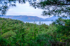 Beautiful scenery in forest. Sea view at the forest scenery Stock Photography