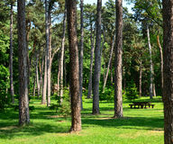 Beautiful scenery of green forest with picnic table and cottage Stock Photo