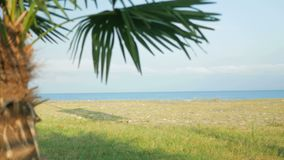 Beautiful scenery: green tree, grass, rocky beach and endless ocean stock video footage