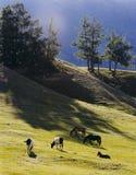 Beautiful Scenery In Xinjiang, China Royalty Free Stock Photography