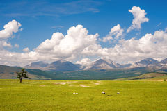 Beautiful scenery between the lake Hovsgol and the mountains of Eastern Sayan Royalty Free Stock Images