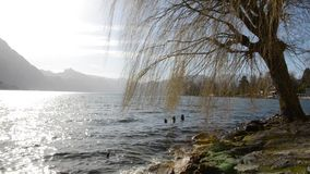 Beautiful scenery at lake Traunsee in Gmunden Upper Austria in spring vintage. On a warm morning in spring stock footage