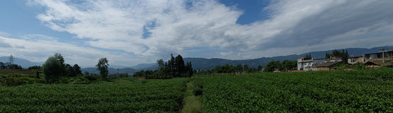 Beautiful scenery of the little village. The blue sky and white clouds and green trees and green teas,beautiful little village in Ya an, Sichuan China Royalty Free Stock Photography