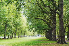 Beautiful scenery in London`s Green Park in the city of Westmin royalty free stock photos