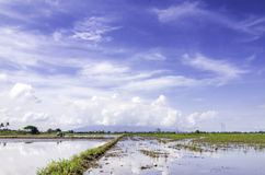 Beautiful scenery at paddy field at new season with blue sky and white clouds covered the mountain background Stock Photos