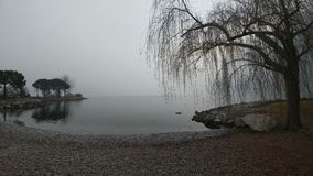 Tree on the lake immersed in the fog Stock Images