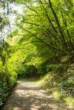 Beautiful scenery prospects around Rursee Stock Image