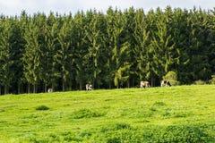 Beautiful scenery prospects around Rursee Stock Photos