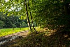 Beautiful scenery prospects around Rursee Royalty Free Stock Photos