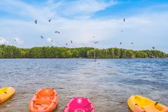 Beautiful scenery of the red hawks while flying to find food with kayaks floating in the sea at Bang Chan village The No-Land. Village in Chanthaburi, Thailand royalty free stock photography